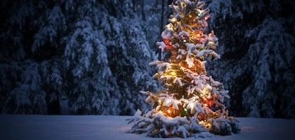 Large christmastree 631 2