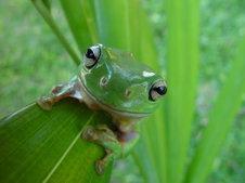 Medium rsz greenpct20treepct20frog