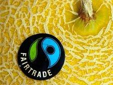 Medium rsz galia melon  fairtrade 014